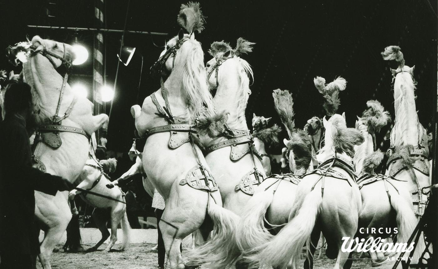 1964 Programmbilder