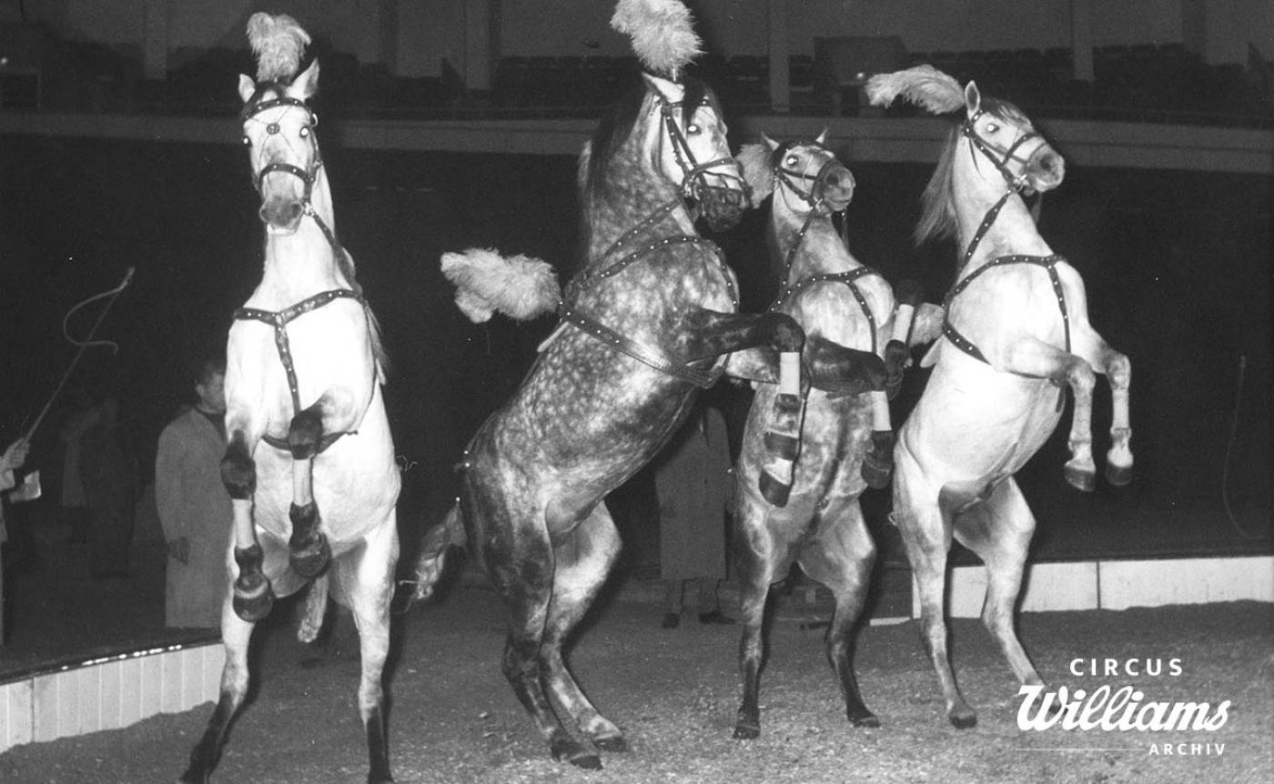 1957 Menschen Tiere Sensatioen